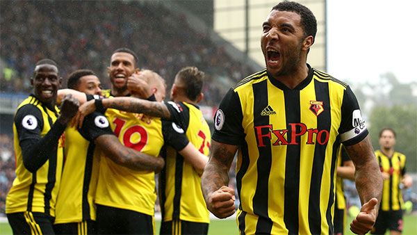Watford F.C. – The Hornets (Ong mật)